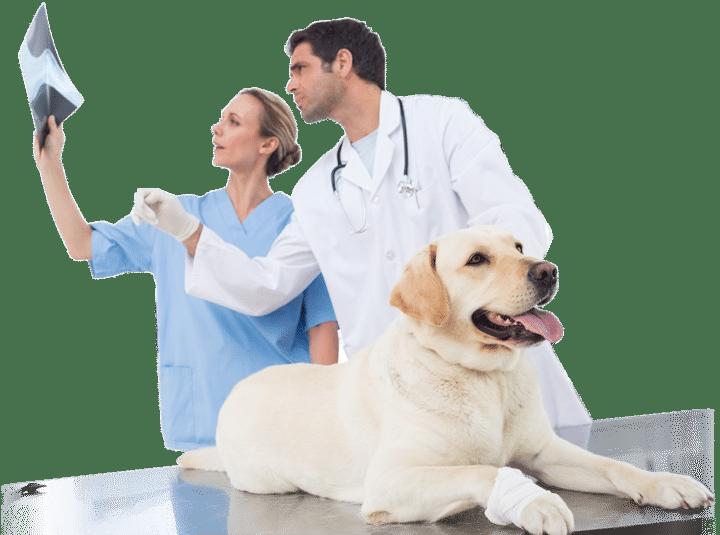 Wollongong Vets looking at Pet X-Ray