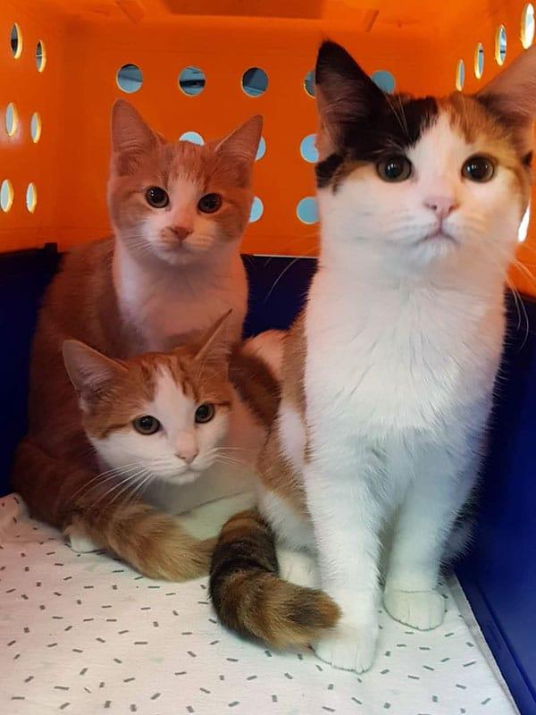 Three Cats at Yallah Vet
