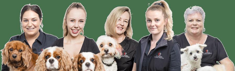 Puppy Preschool Teachers in Illawarra